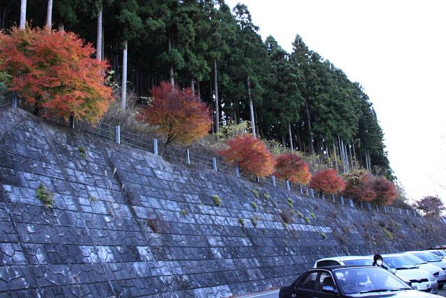 城峰公園・冬桜_d0026817_1333125.jpg