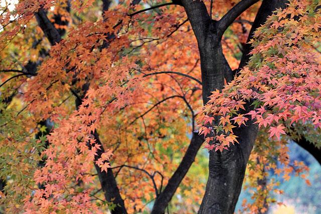 城峰公園・冬桜_d0026817_13351.jpg