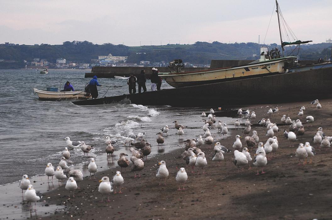 今日の浜辺は 大型カモメばかり_d0039021_18381595.jpg