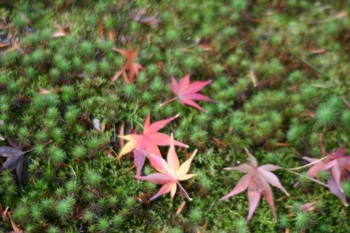 秋の金沢路1泊2日の旅_f0175450_13435751.jpg