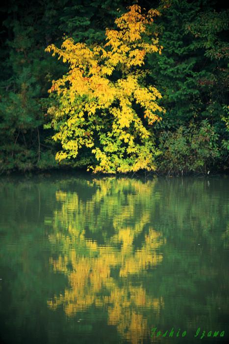 深い緑の奥に映えていた黄葉(福知山にて)_c0181958_23453228.jpg