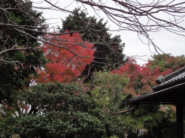 紅葉のおもむき_b0124462_15152447.jpg
