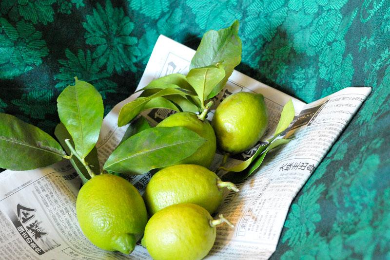 レモン、ゆず、イタリアンパセリ、バジル、ローリエ・月桂樹、ローズマリー、そしてチコリの花、ハヤト瓜 _a0031363_16553677.jpg