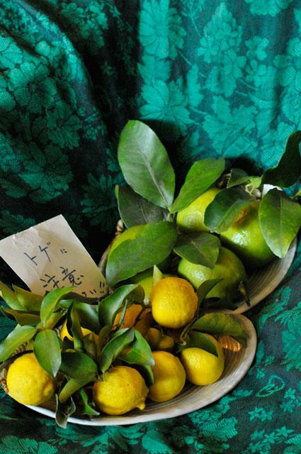 レモン、ゆず、イタリアンパセリ、バジル、ローリエ・月桂樹、ローズマリー、そしてチコリの花、ハヤト瓜 _a0031363_16562061.jpg