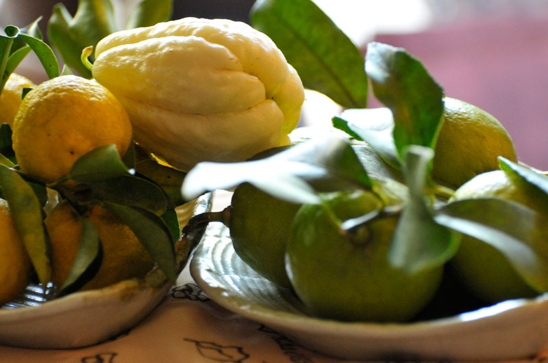 レモン、ゆず、イタリアンパセリ、バジル、ローリエ・月桂樹、ローズマリー、そしてチコリの花、ハヤト瓜 _a0031363_16563977.jpg
