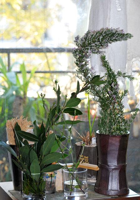 レモン、ゆず、イタリアンパセリ、バジル、ローリエ・月桂樹、ローズマリー、そしてチコリの花、ハヤト瓜 _a0031363_1775587.jpg