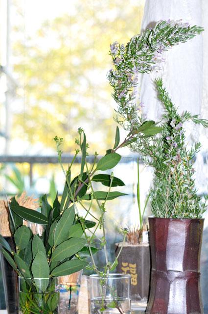 レモン、ゆず、イタリアンパセリ、バジル、ローリエ・月桂樹、ローズマリー、そしてチコリの花、ハヤト瓜 _a0031363_1782780.jpg