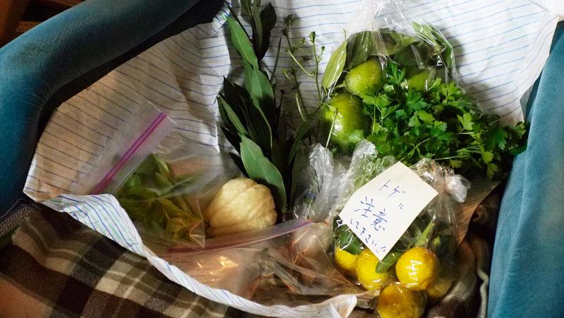 レモン、ゆず、イタリアンパセリ、バジル、ローリエ・月桂樹、ローズマリー、そしてチコリの花、ハヤト瓜 _a0031363_215258.jpg