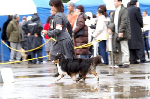 JKC川崎連合_f0126965_853485.jpg