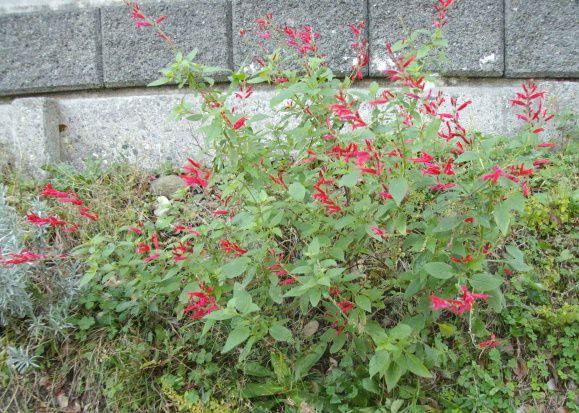 最近の庭の花たち_f0018078_1835097.jpg