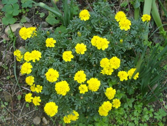 最近の庭の花たち_f0018078_1841153.jpg