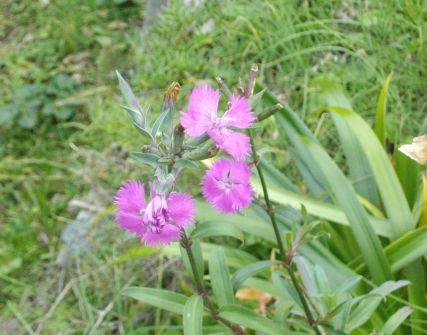 最近の庭の花たち_f0018078_1843094.jpg
