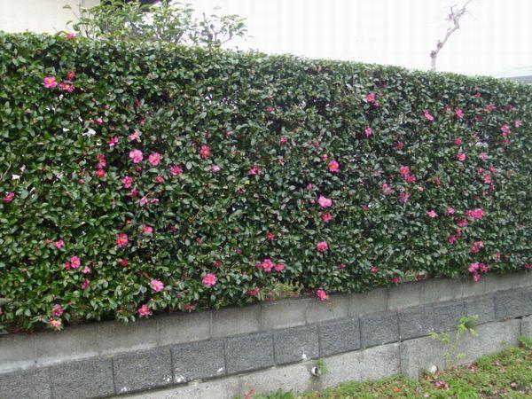 最近の庭の花たち_f0018078_1844935.jpg