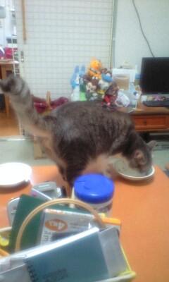 食いしん坊レイン_b0112380_17275783.jpg