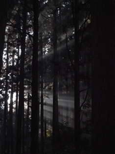 """紅葉トレッキング(金剛山)&バームクーヘン作り終了~""""_e0111396_109592.jpg"""