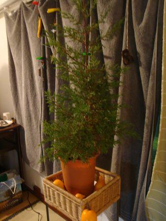 植物をひろう_e0149596_23242912.jpg