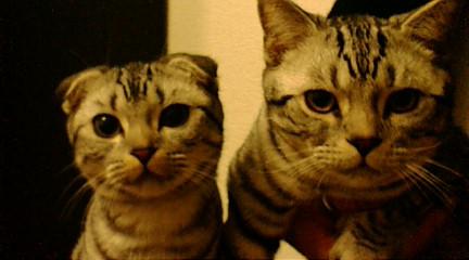ペコとネギ  兄妹なんです_b0032617_20132321.jpg