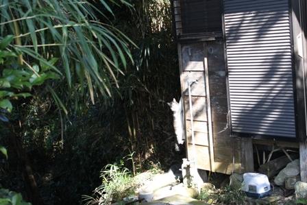 ネコ釣りには焼き鳥屋戦法で。_b0128954_16143966.jpg