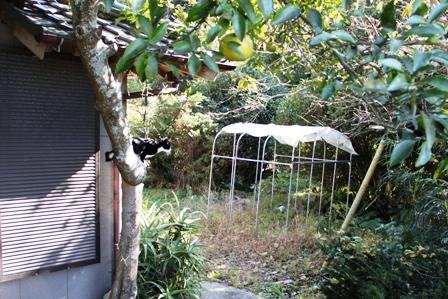 ネコ釣りには焼き鳥屋戦法で。_b0128954_16145161.jpg