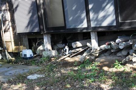 ネコ釣りには焼き鳥屋戦法で。_b0128954_16162515.jpg