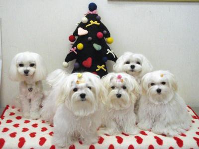 カリファミリー5マルちゃん〜クリスマス撮影第一弾!_b0001465_18331274.jpg
