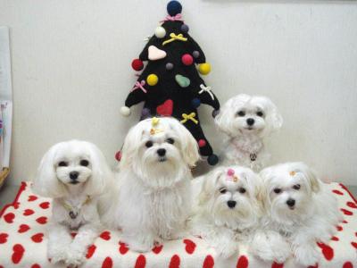 カリファミリー5マルちゃん〜クリスマス撮影第一弾!_b0001465_18401838.jpg