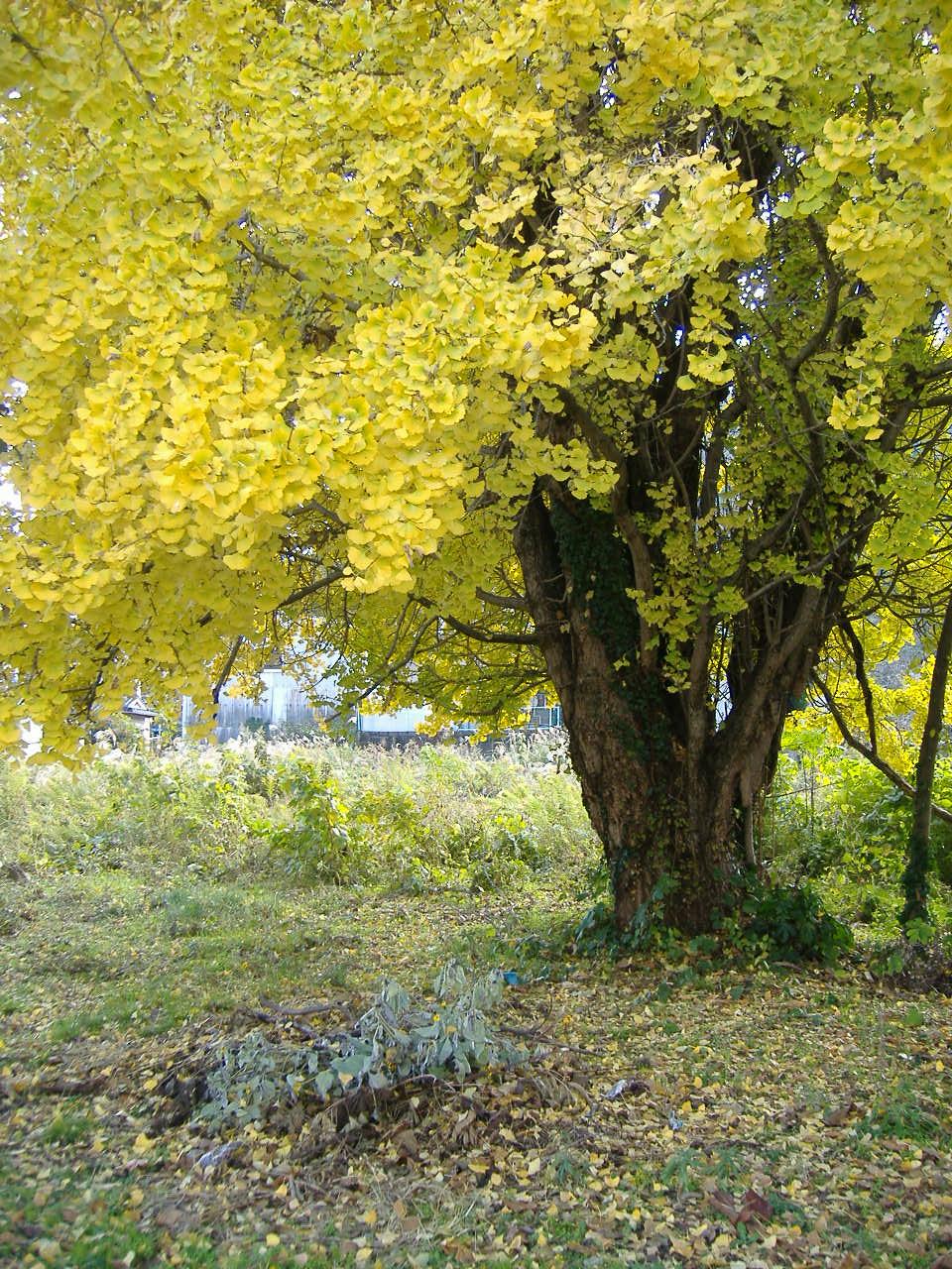 (今さら)秋見つけた_e0175370_13331975.jpg