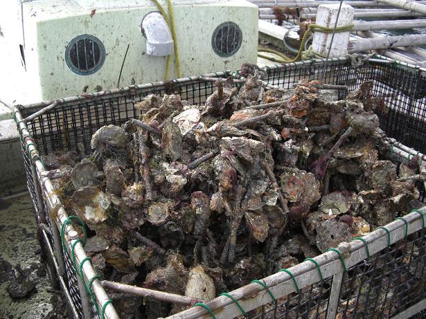 今年もまた牡蠣シーズン到来!_e0175370_16145085.jpg
