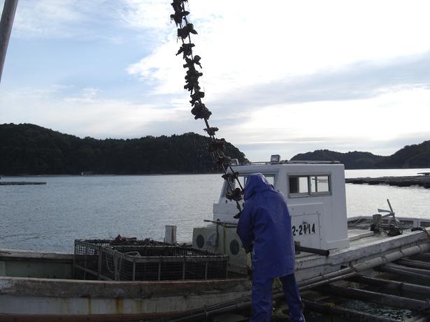 今年もまた牡蠣シーズン到来!_e0175370_1655447.jpg