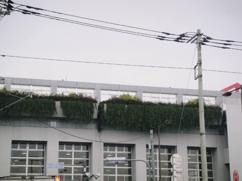 気になる屋上緑化の管理_f0059673_2341302.jpg