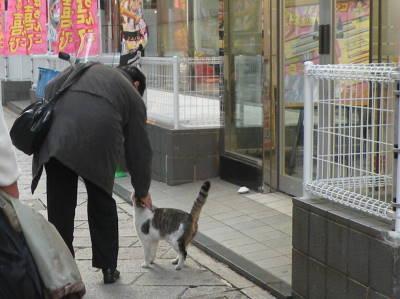 銅座町商店街の猫たち_c0193077_21382833.jpg