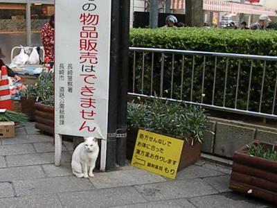 銅座町商店街の猫たち_c0193077_21462727.jpg