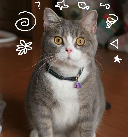 コタロ〜「ねずみにからまれる…」の巻_d0071596_2039421.jpg