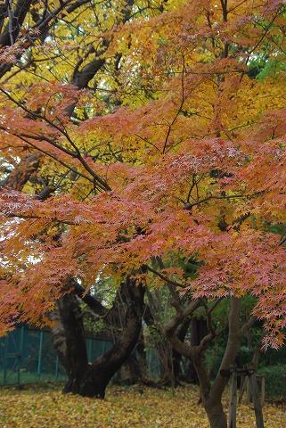 オレンジ色_d0147812_19594183.jpg