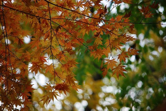 オレンジ色_d0147812_2003065.jpg