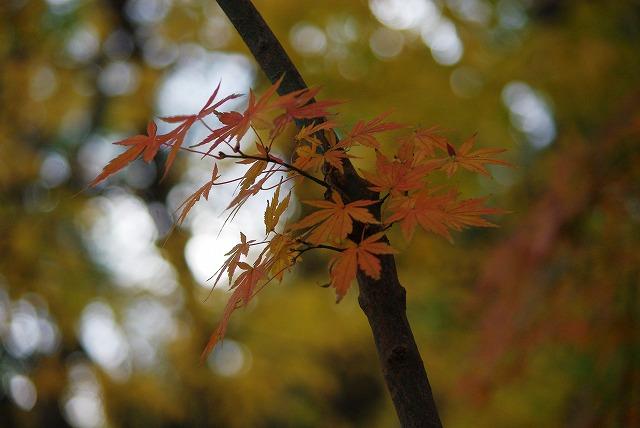 オレンジ色_d0147812_2005130.jpg