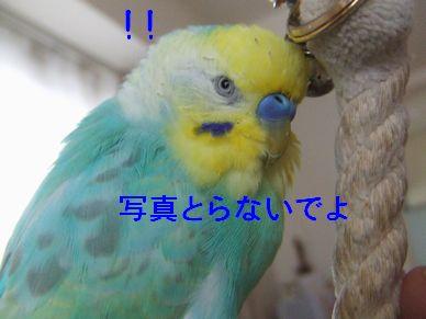 b0082757_822147.jpg