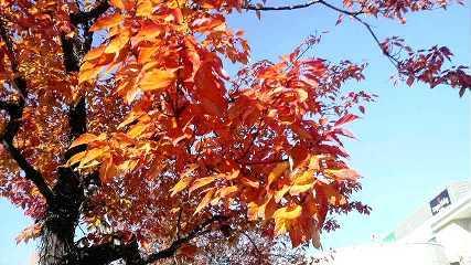 紅葉につつまれて、_b0157157_1340053.jpg