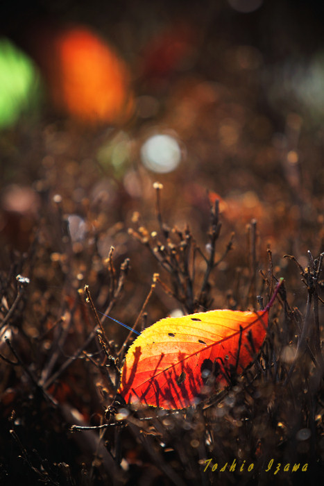 撮影散歩で見つける秋の楽しみ_c0181958_0133194.jpg