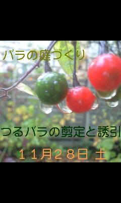 バラの庭づくり教室_b0089559_0181429.jpg