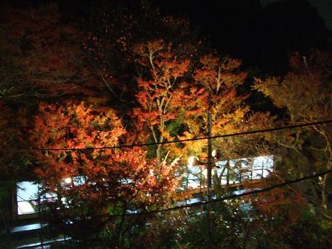 2009年11月25日 紅葉_c0078659_1440359.jpg