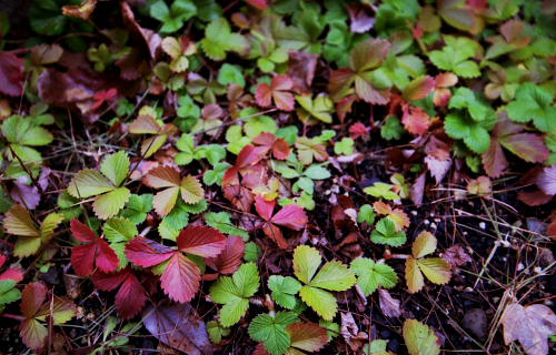 Late autumn in garden_f0173463_5512055.jpg