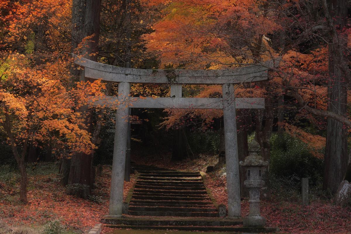 丹波紅葉オフ <二宮神社>  1_f0021869_05722.jpg