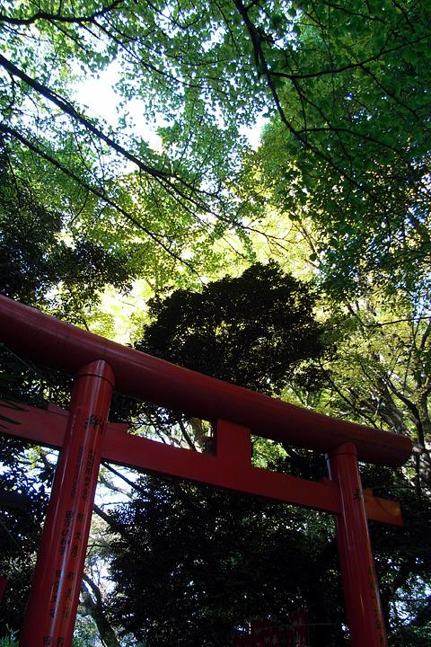 「続きで3枚」の快感(^^; (日枝神社:11/26)_b0006870_19193556.jpg
