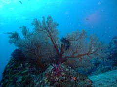 11月19~23日 Similan&Surin Cruise_d0086871_12232799.jpg