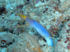 11月19~23日 Similan&Surin Cruise_d0086871_12234626.jpg