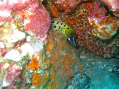 11月19~23日 Similan&Surin Cruise_d0086871_13122457.jpg
