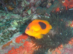 11月19~23日 Similan&Surin Cruise_d0086871_13173614.jpg