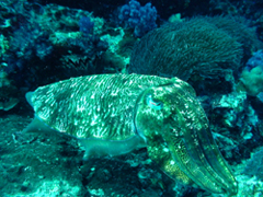 11月19~23日 Similan&Surin Cruise_d0086871_13175281.jpg