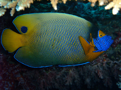 11月19~23日 Similan&Surin Cruise_d0086871_13592549.jpg